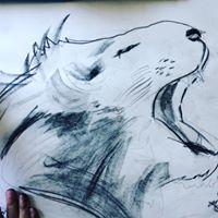 Sketching Drawing Animals